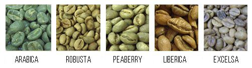 z[khoinghiepcafe.com] Các loại cafe Arabica - Robusta - Liberica các loại hạt cafe
