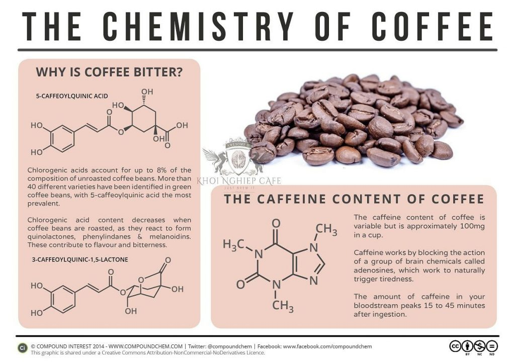 Cold Brew Coffee là gì - Bình pha cafe lạnh cold brew