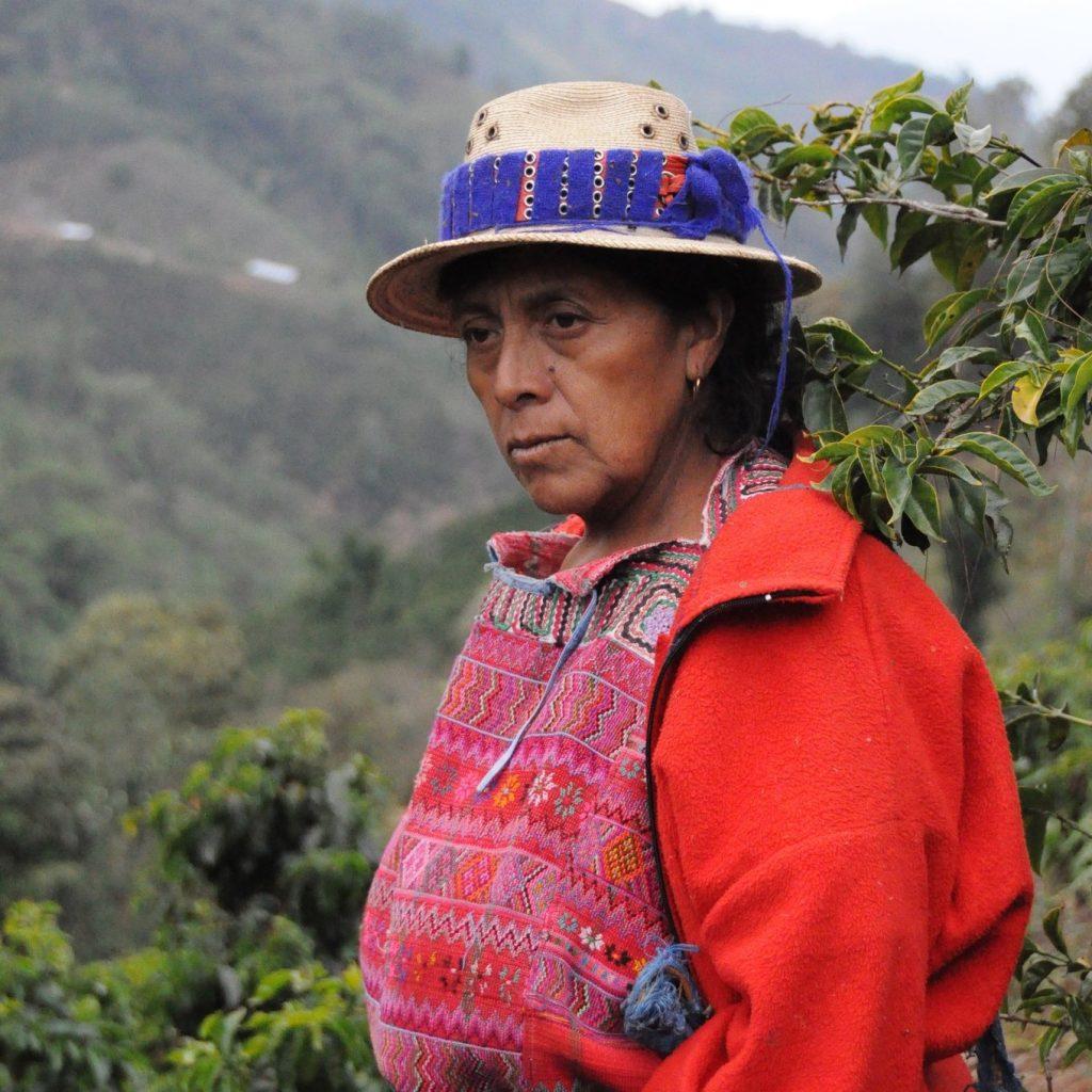 khoi nghiep cafe arabica pacaya guatemala chau my cao cap pha phin viet nam qua tang thu hoach cafe