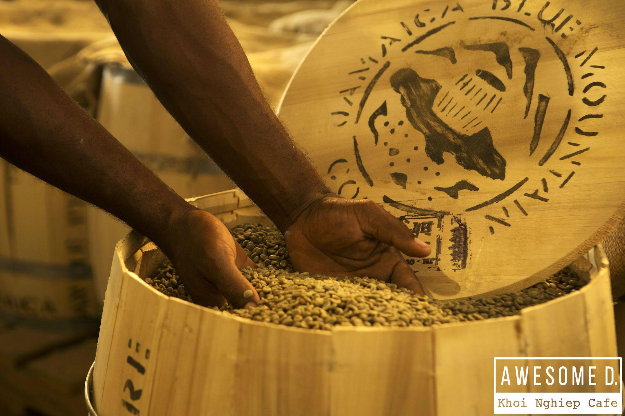 z[khoinghiepcafe.com] Các loại cafe Arabica - Robusta - Liberica cafe Arabica blue mountain