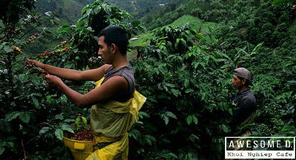 z[khoinghiepcafe.com] Từ gieo trồng đến tách cafe 2