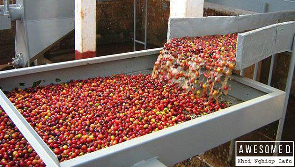 z[khoinghiepcafe.com] Từ gieo trồng đến tách cafe 3b